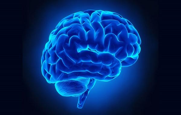 codigo salud online cerebro (2)
