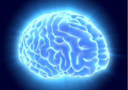 codigo salud online cerebro (4)